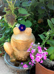 flowers_more/Frog_with_morningglory.jpg